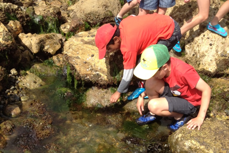 Rockpool safari at Seaton