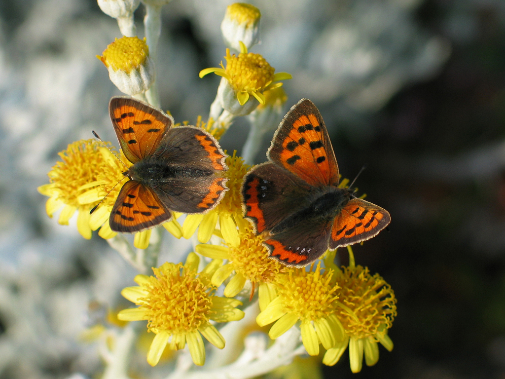 032 small copper