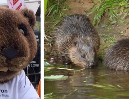 Beaver Weekend