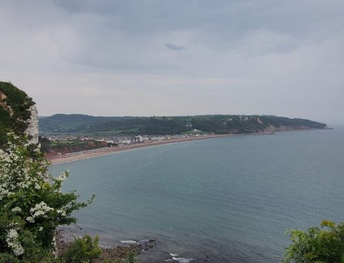 Wednesday Undercliff Talk and Cream Tea