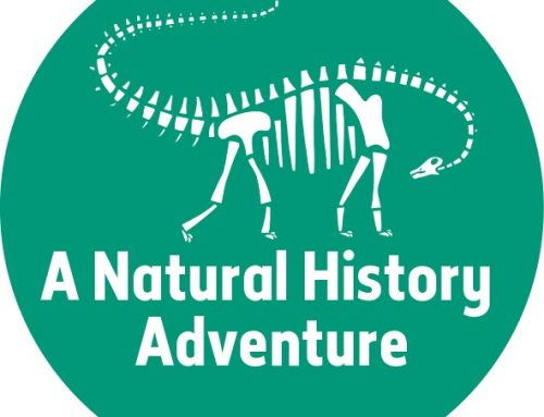A Natural History Adventure – Dippy's skull visits Seaton Jurassic