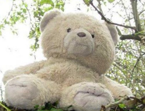 World Animal Day – free entry for children with a soft toy