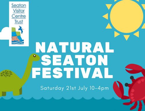 Natural Seaton Festival