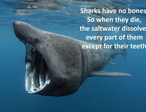 Sharks Live!