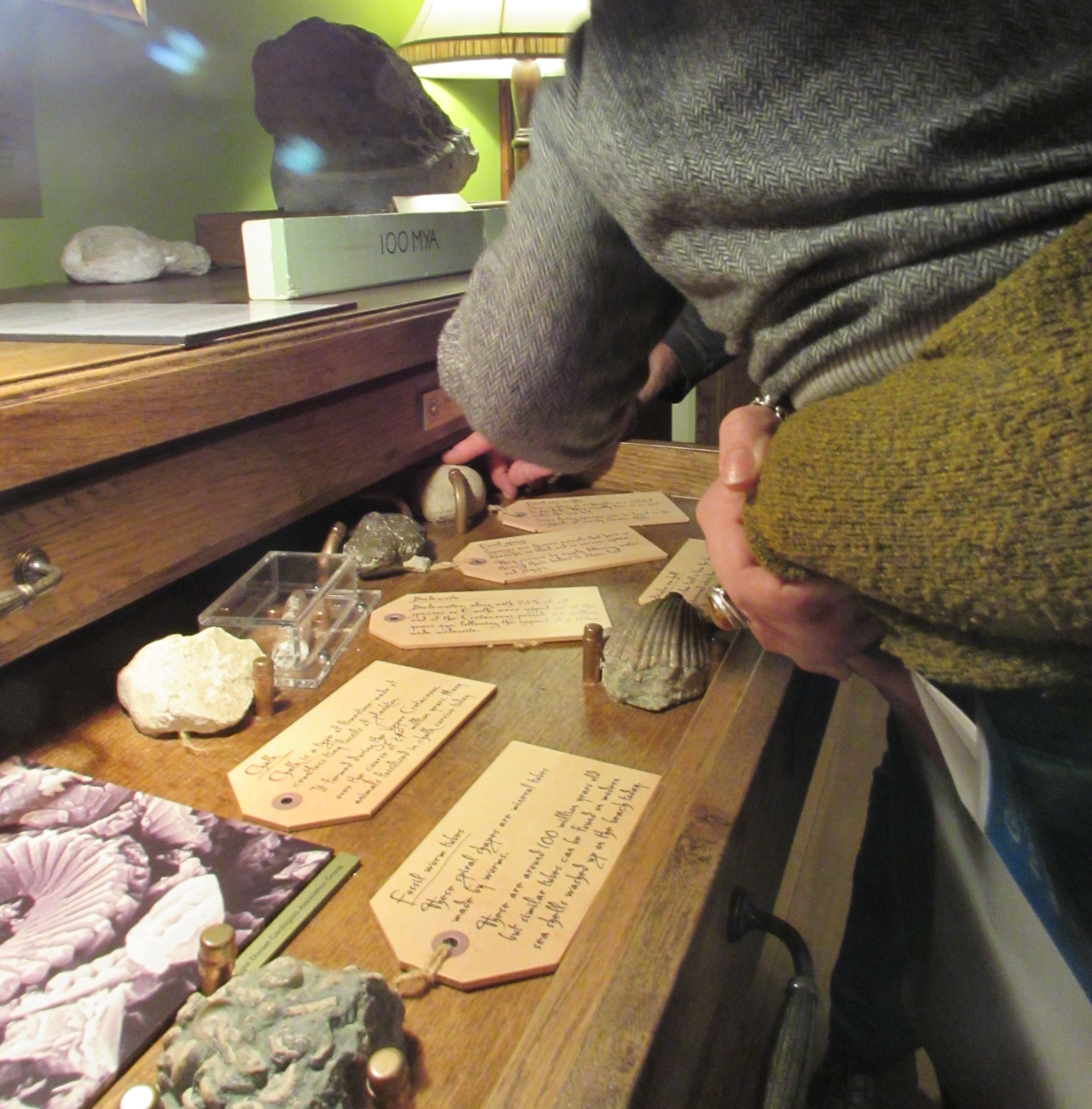 Fossil Day- 19th August Sessions at 11am and 2pm