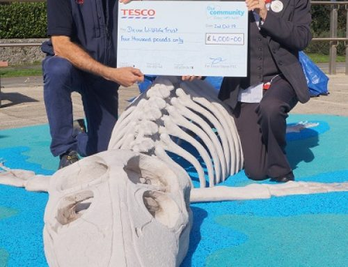 Pliosaur Launch – Thanks to Tesco Bags of Help