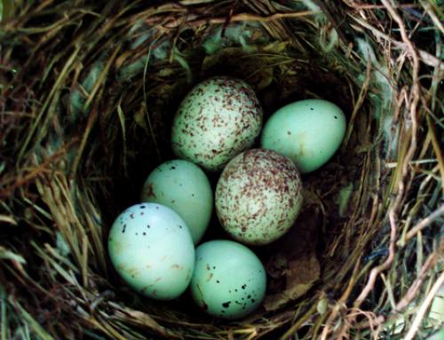 Whose Egg? Garden Trail